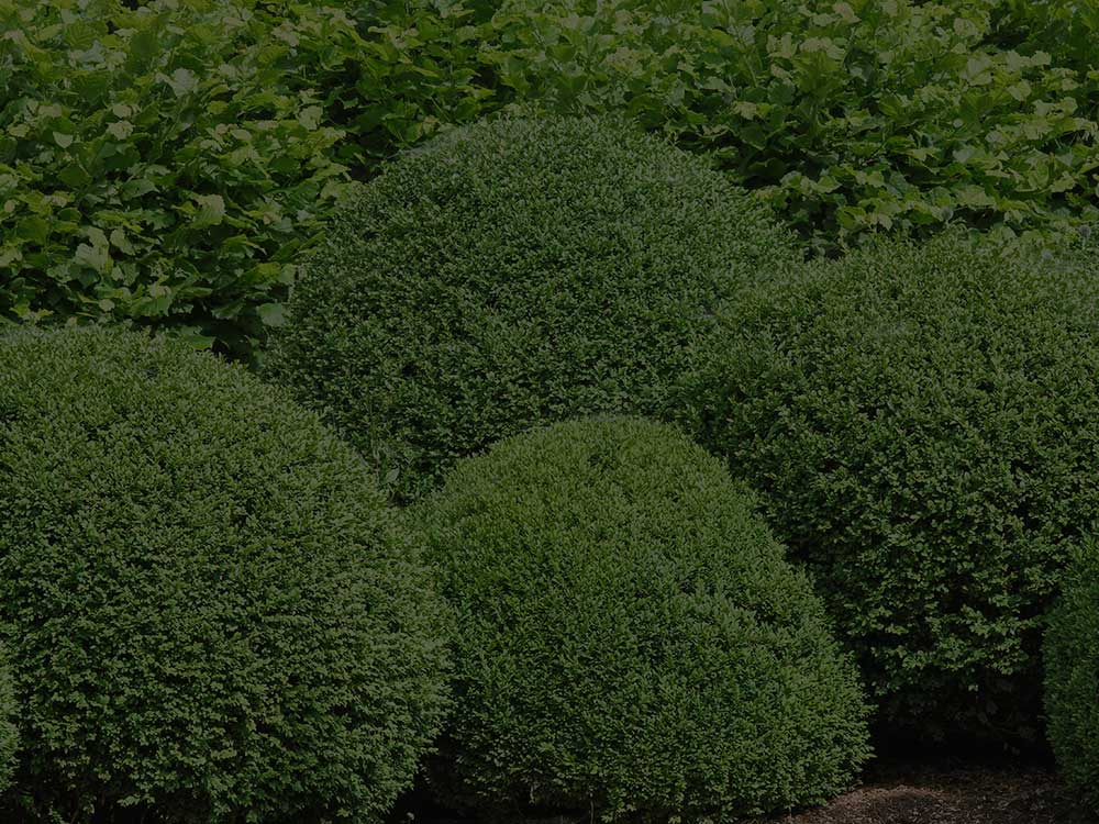 Oklahoma City Shrubs and Hedges