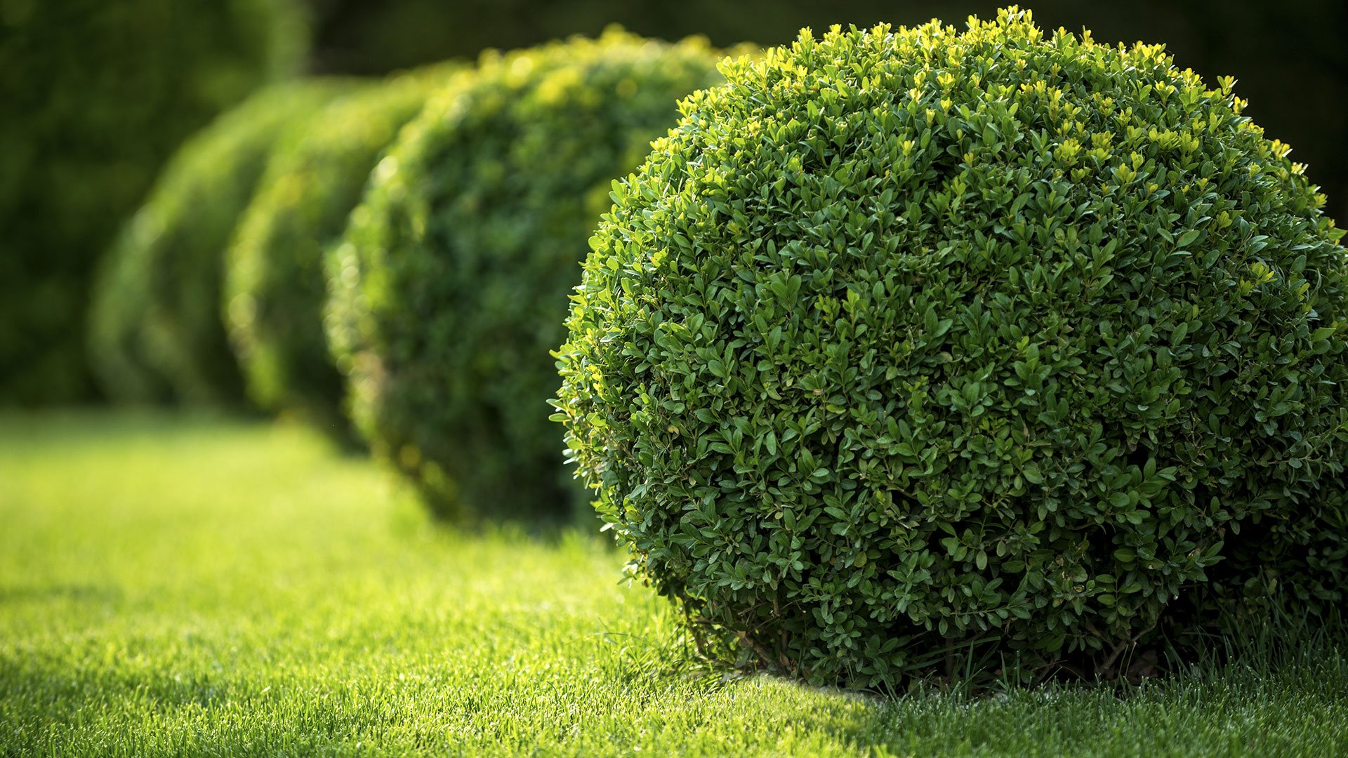 Serna Lawn Landscape, Lawn Care and Tree Services slide 1