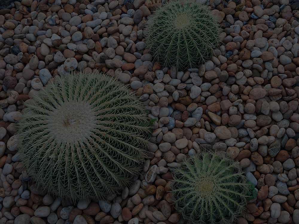 Edmond Xeriscaping