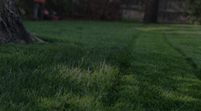Moore Lawn Care